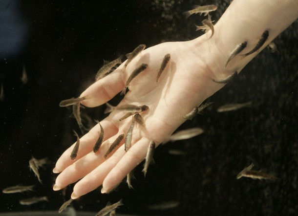 Fish therapy spa and hands and feet reflextherapy for Garra fish spa